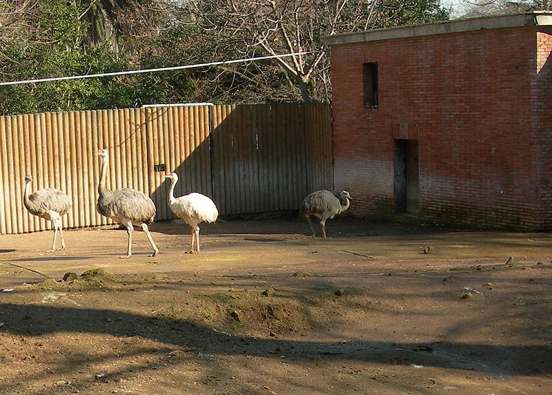 zoo Aarhus lækker neger